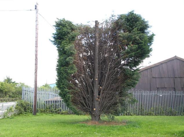 Tree Surgeon Oldham